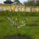 Potsdam, Park Sanssouci, Neue Kammern, Blick auf Gartenseite, Historische M¸hle und blühende Kirschbäume (c) SPSG, Foto: Hans Bach, Potsdam