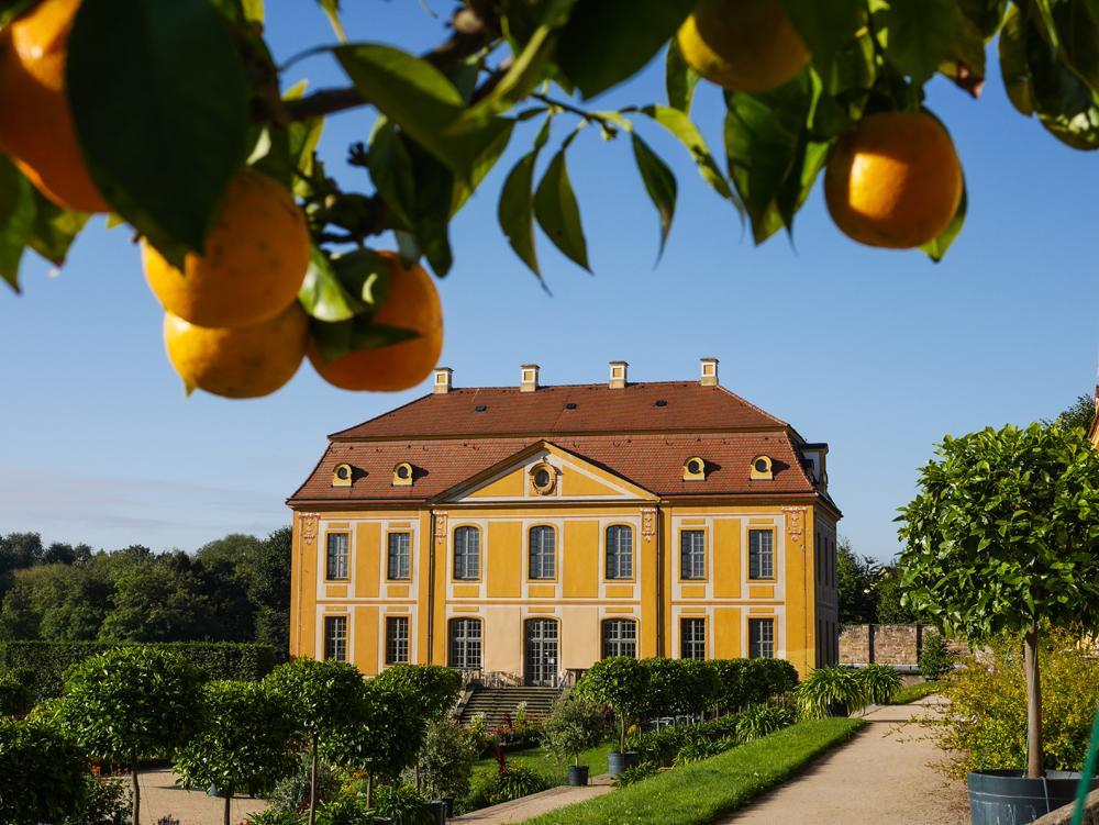 Barockgarten Großsedlitz, Herrenhaus mit Orangen (c) SBGgGmbH