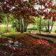 Goldener Herbst im Park, (c) Foto Sergey Karepanow