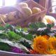 Wilde Kräuter kommen im Gutshaus Ehmendorf auf den Tisch, (c) Gutshaus Ehmkendorf